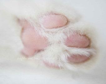 Cat Paw Fine Art Photography Feet Fur Feline Kitten Kitty Animal Pet Macro Nursery White Pink Grey Gray Minimalist Home Decor Wall Art