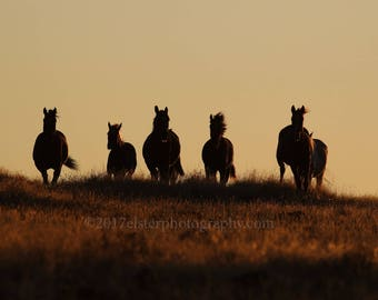 Mustangs at Sunset, mustang, horse, wild horse, wildlife photography, equine art, wildlife, photography, sunset, silhouette, stable