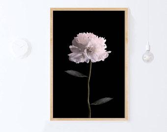 Floral Print, Poster Scandinavian, Peony Art Print, Flower Photo, Peony Print, Botanical Printable Art, Flower Photography Digital Download