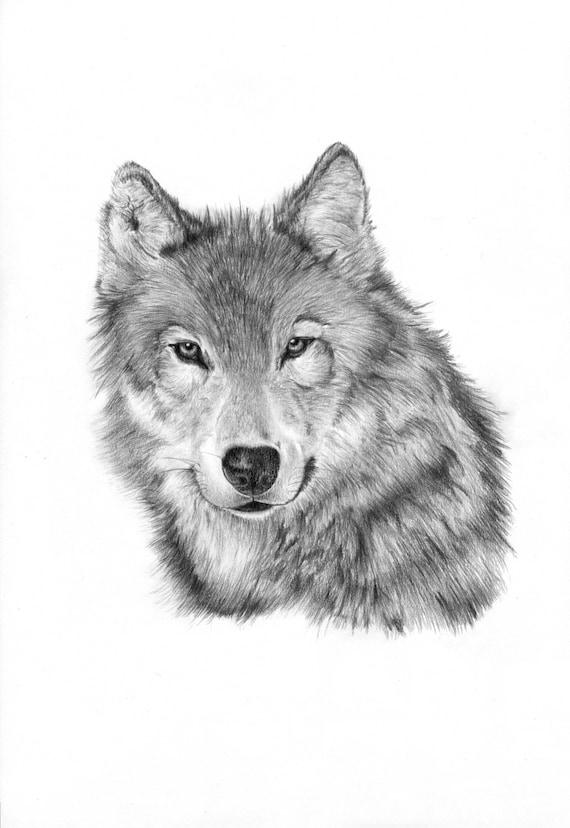 Lupo solitario matita disegno stampa for Lupo disegno a matita
