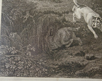 Philip Reinagle ARA 1749 to 1833 printed by J Scott Terriers chasing a mouse