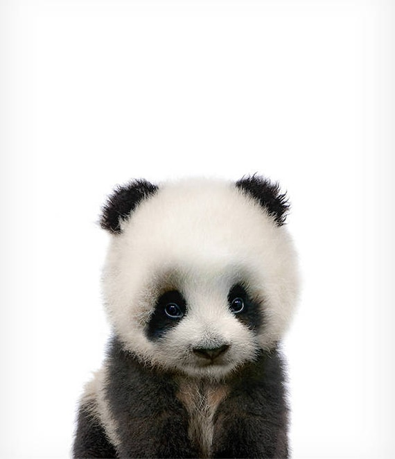 Sly image inside printable panda pictures