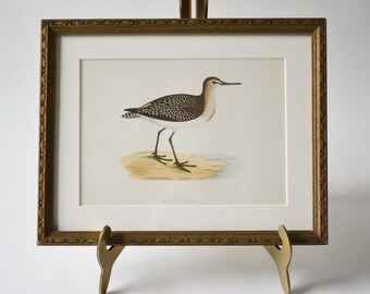 Antique Hand Colored Wood Engraving Sandpiper Shore Bird Seashore Nature Engraving Framed Gallery Art Wall Art FREE SHIPPING