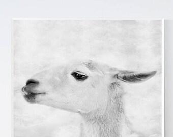llama art print - Black and white prints - Grayscale art - llama prints - Llama wall art, PRINTABLE, farmhouse animal, animals nursery print