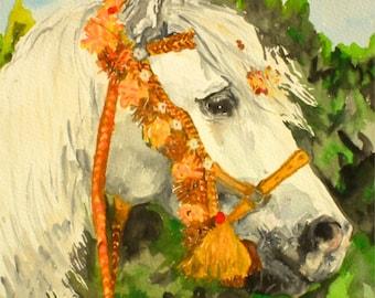My Arab Horse