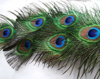 Peacock Feathers,Five All Seeing Eye Feathers, Eyes Measure 1.5x2 in, 8 to 18in in Length,Weddings,Prom.Shower,Center Pieces,Corsage,Bouquet