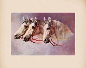 Three Horses New 4x6 Vintage Postcard Image Photo Print FN07