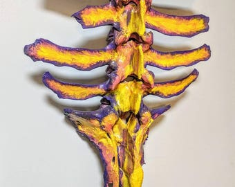 Articulated Cow Spine - Taxidermy - Hand Painted - Oddities - Home Decor - Cruelty Free