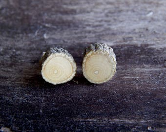 Delicate Holly Rustic Twig Miniature Wooden Stud Earrings by Tanja Sova