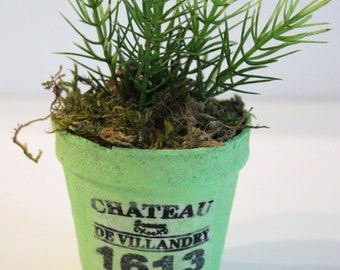 Little peat pots of goodness with French graphics and plants