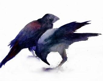 Crows- Print
