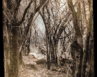 "Fairytale Forest Photo ""Deep Dark Woods"" Dreamy Fine Art Woodland Photograph Print -Surreal Sepia Brown Vintage Photo"