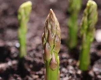 Asparagus Seeds 20+