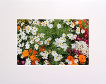 Summer Flowers in Iceland, Photo in 30x23 cm Mat Board, Wall Art, Home Decor, Limited Edition Photography