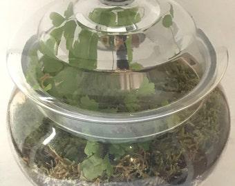 Moss Terrarium Starter Kit