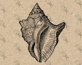 Vintage image Sea Shell retro drawing Instant Download Digital printable Black and White clipart graphic iron on burlap transfer HQ300dpi