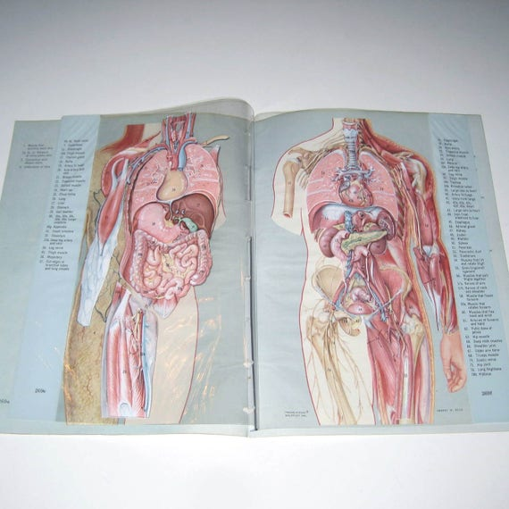Vintage Illustrated Transparency Book Pages Of Anatomy Or Human Body