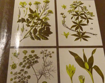 Gardener Gift Herbs Their Culture and Uses Fabulous Reference