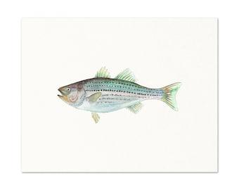 Watercolor Striped Bass Wall Art. Realistic Striped Bass Painting. Lake House Decor. Fish Art Print. Bass Art. Fisherman Gift. Dad Gift.