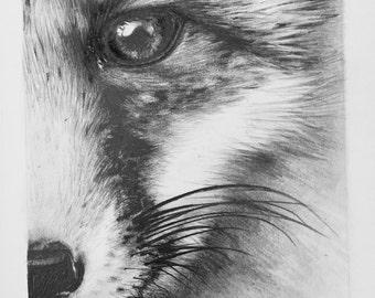 Print of pencil drawing of fox