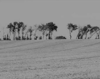 Long photograph, trees in the country, landscape