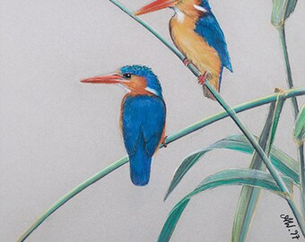 Couples Wall Art Deco BIRD LOVERS ARTWORK Malachite Kingfisher Chalk Pastel Drawing Nature Reeds leaves feathers Africa Green Blue Orange