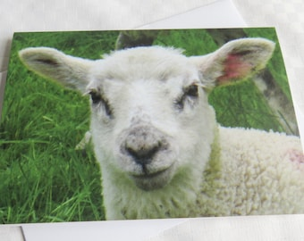 Lamb Card, Greetings Card, Blank Card, Nature Photography Card,  Baby Animal Card, Farm Card