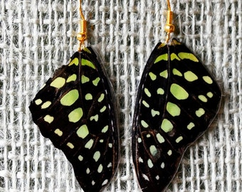 Real Green Tailed Jay Butterfly Triangle Wing Earrings Animal Friendly Recycled Jewelry