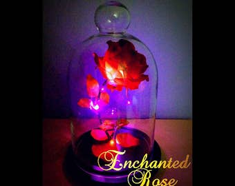 Enchanted Rose lighted, Beauty and the Beast