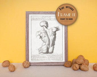 """Vintage illustration of a male torso (back) with musculature - framed fine art print, anatomy art, 8""""x10"""" ; 11""""x14"""", FREE SHIPPING - 162"""