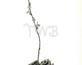 Cactus Print,  Botanical Print, Art Print, Home Decor, Book Plate, Illustration, Wall Decor, Haworthia truncata, Green, A-14