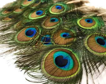 "3-6"" Peacock Feathers, 10 Pieces - MINI Natural Peacock Tail Body feathers : 110"