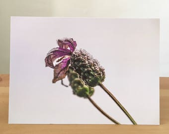 Frosted Lavender Greeting Card
