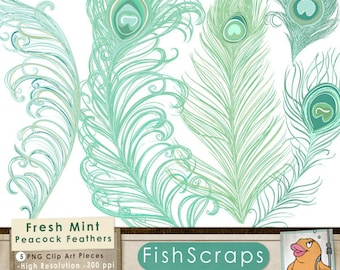 Mint Peacock Feather Clip Art, Cottage Chic Mint Wedding Illustration, Royalty Free Small Business Design Download