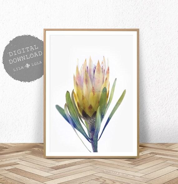 Protea Print, Australian Native Flower Wall Art, Printable Poster, Digital Download, Photography, Yellow Flower Decor, Botanical Print