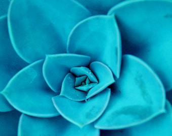 Nature Photography, Monochromatic Picture, Still Life Photo, Flower, Botanical, Blue, Teal, Aqua 8x8 inch Print Succulent