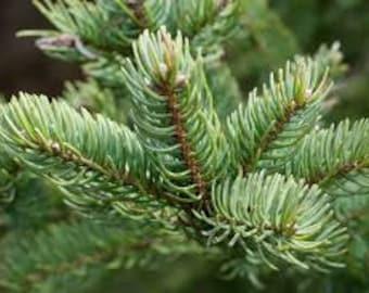 1/2lb Balsam Fir Needle Tip Organic Adirondack USA Grown Wild Harvest, Dried Traditional Christmas Fragrance Potpourri Sachet Pillow 8oz 4oz