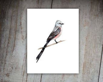 Scissor-tailed Flycatcher Oklahoma State Bird, Watercolor Wildlife Nature Print, Wall Decor, State Bird, Nature, Wildlife