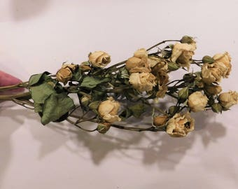 Dried Roses, Antique ivory Roses, Beige dried roses,