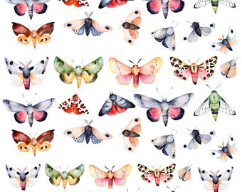 The Evolution Of The Butterfly - Ceramic Waterslide Decal - Enamel Decal - Fusible Decal - 48398
