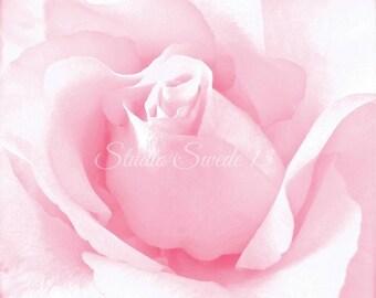 """Rose Art, Pink Rose Photo, Garden Photography, Pink Flower, Romantic Nature Print, Macro Modern Art, Minimalism, Rose Bud- """"Blushing"""""""