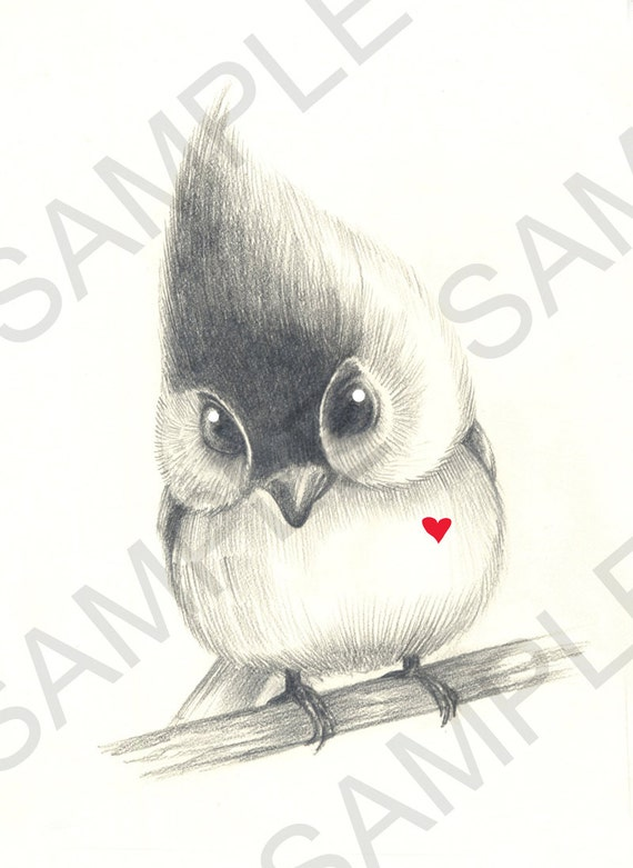 Items similar to cute bird with heart original pencil drawing print 11x17 illustration art by karlin collette on etsy