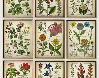 BOTANICAL print SET of 9 art prints, Botanical Set, botanical poster, flower poster, flowers print set, botanical illustration