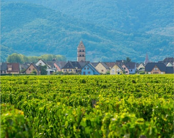 French Vineyard and Village | Fine Art Photography Print
