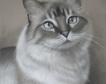 CUSTOM Cat Drawing From your photo - 11x14 -  Realistic Hand drawn fine art - Charcoal portrait - Kitten drawing, pet portrait painting