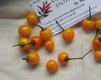 Cumari Wild Chili Pepper, 10 seeds