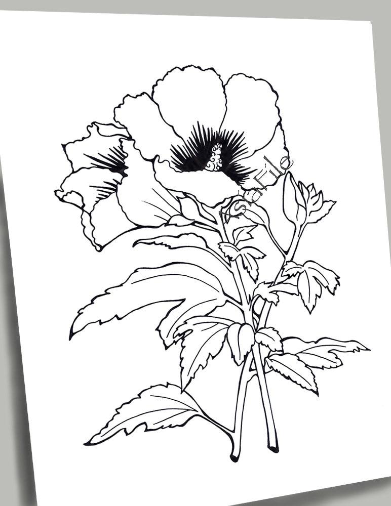 PÁGINAS para colorear para todas las edades flores 9