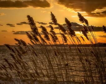 Beach Grass Yellow Sunset at Jones Beach West End
