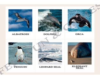 6 Animals of Antarctica, Montessori Learning Cards for combining with the world map of the continents, materials color coded Montessori