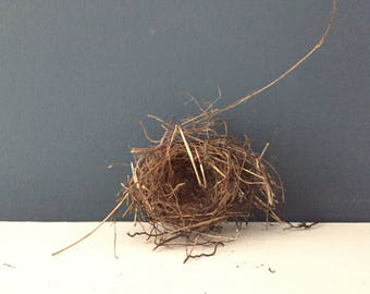 Pair of Petite Bird's Nests